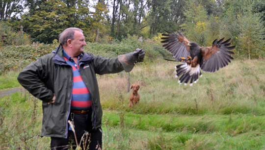 Corporate Falconry Days in Warwickshire